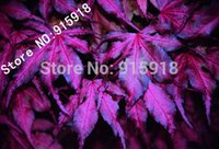 "Cheap Tree seeds 20pcs ""Purple Ghost"" Japanese Maple Seed Novelty bonsai! Home gardening DIY!"