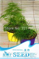 green asparagus fresh - 1 Pack Seeds Chinese Asparagus fern seeds Fresh And Green Asparagus fern Setose Asparagus F009