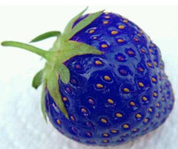 Wholesale 2015 Hot Natural Sweet Blue Strawberry Seeds Nutritious Delicious Plant Seed DIY Garden fruit seeds potted plants garden supplies bonsai