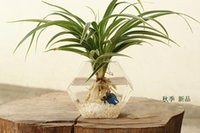 glass fishbowl - New design hexagon glass planter terrarium wall hanging vase glass fishbowl desktop vase for home decor