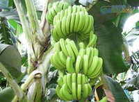beautiful fruit - 120PCS Bag Imported Banana Seeds Milk Taste Beautiful Delicious Fruit Seeds Mystery Gift
