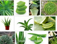 beauty delicious - Promotion Multifunction Aloe seeds plant seed delicious beauty of succulents potted aloe flower seeds balcony particles b