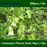 Cheap Bellflower Family Codonopsis Pilosula Seeds 300pcs, Traditional Chinese Medicine Poor Man's Ginseng Seeds, Good Dang Shen Seeds