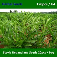 Wholesale Widely Cultivated Stevia Rebaudiana Seeds Dietary Supplement Tian Ye Ju Seeds Available As A Food Additive Herbal Seeds