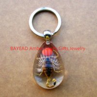 amber keyring - Real Brown Scorpion with Red Bean Resin Keychains M Size Insect Amber Bug Keyring School Gift High Quality