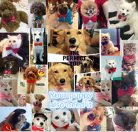 Bandanas, Bows & Accessories Fall/Winter Easter Dog Accessories Dog Dress Best Bow Wow Pet Tie 16 Color Choice Fast Free Shipping Hot Sale