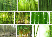 bamboo items - Promotion fresh giant moso bamboo seeds for DIY home garden Household items tree seeds Novel