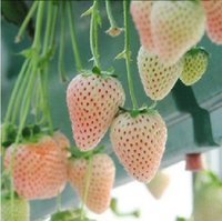 Cheap Free shipping strawberry seeds, 20 PCS seeds, balcony plants, garden planting, potted plants