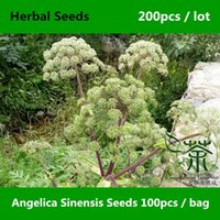 Cheap sinensis seeds Best herbal seeds