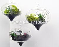 Wholesale Set of air plant terrarium kits onion shape indoor garden terrarium succulent moss planters for garden decor home decor
