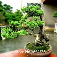 Cheap High quality 100pcs bag banyan tree seeds ficus ginseng seeds bonsai seeds green tree seeds DIY home garden
