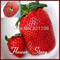 Cheap plant vegetable seed Best planting peony seeds