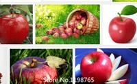 anacardium occidentale - Promotion Cashew Nut Apple seeds Plant Anacardium Occidentale Tree Planting Seeds Fresh New fruit seeds Novel Seed