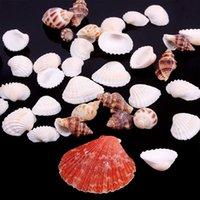 Wholesale New Beautiful Approx g Beach Mixed SeaShells Mix Sea Shells Shell Craft SeaShells Aquarium
