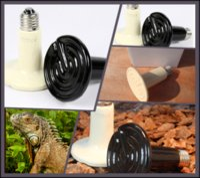 Cheap 100Pcs lot 75W 110v 220v Ceramic Emitter Heated Pet Appliances for Reptile Heat Lamp Light P401