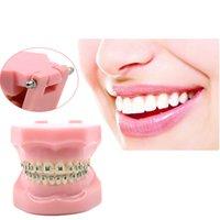 Cheap Dental Orthodontic Standard Tooth Model METAL Brackets & LIGATURE TIES