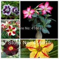Wholesale 10 Mix Seeds Adenium Colors Absorption Of Formaldehyde Colorful Bonsai Desert Rose Flower Seeds Plus Mysterious Gift