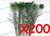 Wholesale 200pcs Feather PEACOCK TAILS quot quot Tail Feathers Fan
