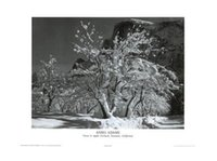 ansel adams - The Ansel Adams Snow Tree classical Stylish Nice Home Decor Retro Poster x76cm Wall Sticker