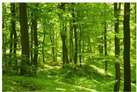 Wholesale Customize size Green forest woods sun image wallpaper mural wallpaper non wvoen wallpaper factory direct20152697