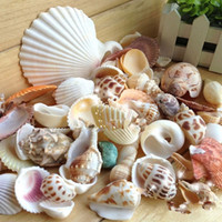 aquarium shell decoration - Conch shells particles mixed pure natural colorful fossil specimens of fish tank aquarium decoration products