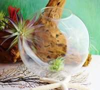 glass fishbowl - Wall fishbowl air plants indoor wall decor glass planter vase for home decoration house ornament garden decor