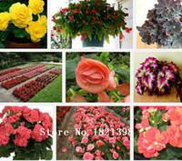 begonia seed - begonia seeds flower seeds varieties five particles per pack