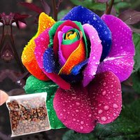 Wholesale Rare magical colorful Rainbow Rose Flower Seeds Multi Color Plants for Home Garden