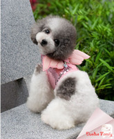 batman leash - Angel Batman suit harness dog leash post it free fit bulldog Teddy Poodle Chihuahua Beagles Yorkshire Pomeranian Labrador