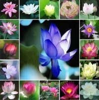 Wholesale colorful waterlily seeds lotus flower seed Gorgeous Aquatic plants seeds lotus seeds color