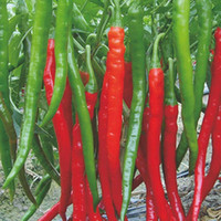 Wholesale 1bag10 Red Hot High quality and cheap Spices Spicy Chili Pepper Seeds Plants Up To cm Long