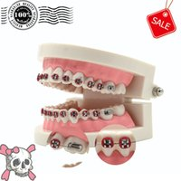 Cheap Dental Orthodontic Standard Teeth Tooth Model METAL Brackets & LIGATURE TIES Free Ship A model is worth for you