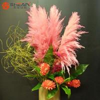 Wholesale Impressive Pink Pampas Grass Grass Seeds Pink Cortaderia Selloana Seeds Pieces