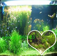 aquatic plant aquarium - mixed seeds bag plants pond aquarium fish tank seeds mixed cultivation of aquatic plants water purification seeds