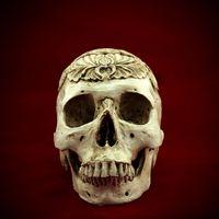 medical packaging - Egypt Human Skull skeleton bone Replica Resin Model Medical Realistic lifesize Halloween
