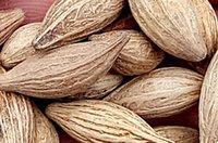 al por mayor semillas osmanthus-200pcs un conjunto Osmanthus fragrans (Thunb.) Lour árbol Semilla 100% real con regalo misterioso Inicio Jardín Diy