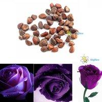 Mechanical belle mechanical - tradebox Rose pourpre Fleur graines Dcoration Mini Rose de Sharon belles couleurs Hot