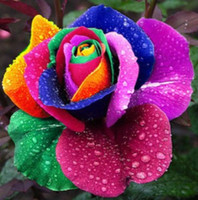 Wholesale Hot Selling Pieces Rose Seeds Flower Colorful Rose Seeds