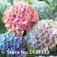 bonsai - Promotion Hot sale Hydrangea Mixed Hydrangea Seeds Flowers Garden Plant Bonsai Viburnum macrocephalum Fort