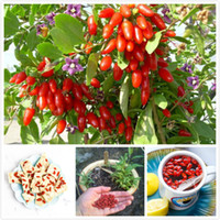 antioxidant berries - 100 Himalayan Goji Berry seeds wolfberry most popular heathy berry dwarf bush rich in Antioxidant Shipping SS053