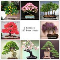al por mayor árbol bonsai-8 tipos Semillas Bonsái, 240 semillas, paquete perfecto jardín de DIY Bonsai, envío libre + regalo libre