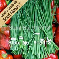 Wholesale 500 Seeds Common Chives Herb Allium schoenoprasum Seeds By Seed Needs