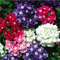 Wholesale 1Bag Garden Yard Decor Vervain Verbena Hortensis Flower Mixed Color Seeds NEW