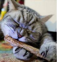 Wholesale 10PCS catnip silvervine stick cat dental health sticks pet catnip products ST17589
