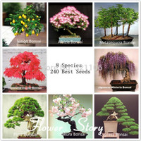 Wholesale 8 kinds Bonsai Tree Seeds seeds Perfect DIY Home Garden Bonsai package free gift