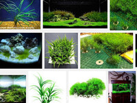 aquarium grasses - Promotion Hot selling aquarium grass seeds mix water aquatic plant grass seeds kinds family easy plant seeds free