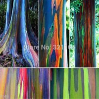Wholesale RAINBOW TREE seeds Eucalyptus deglupta Mindanao Gum