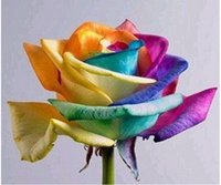 Wholesale 2015 Rainbow Rose Seeds Multi colored petal new and beautiful Multi color Plants seeds