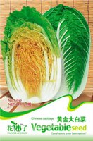 Vagetable Seeds c037 - 20 Gold cabbage seeds chinese cabbage brassica pekinensis rupr C037