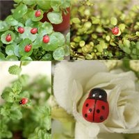 Wholesale Moss Micro Landscape Ornaments Cartoon Mini Coccinella Septempunctata Small Toys Ecology Bottle DIY Accessories
